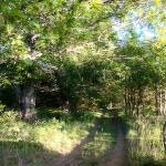 Lugar conocido por cuatro caminos. Don Quijote y Rocinante