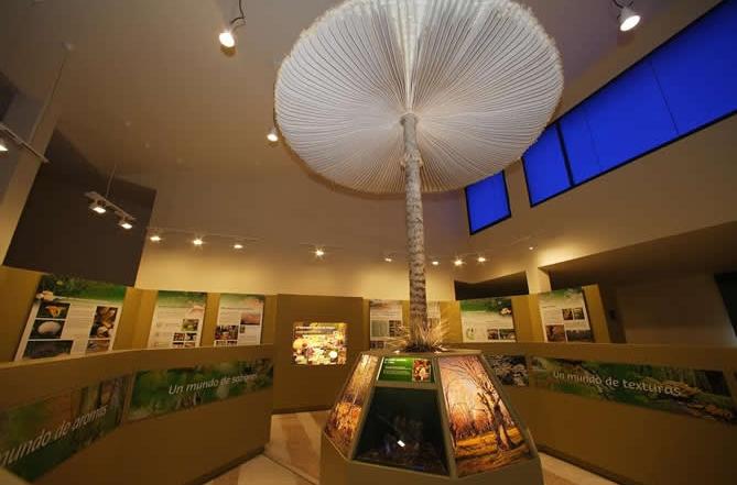 Centro de interpretación de la Micología