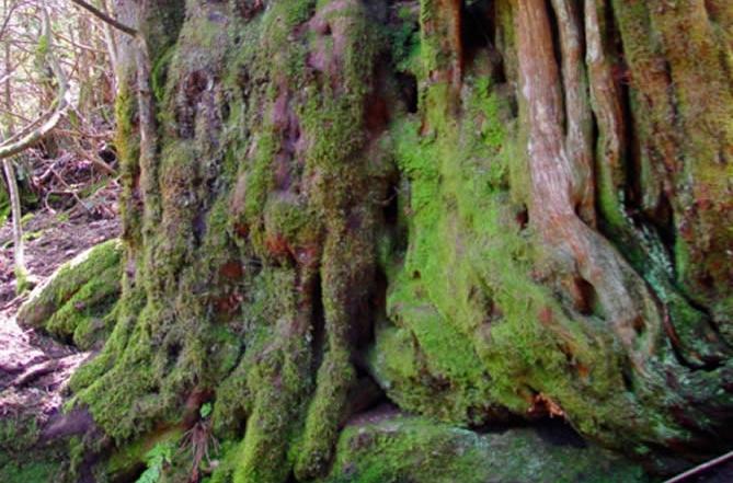 Bosque del Tejedelo